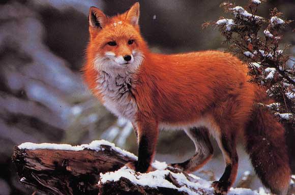 Firefox 3.5.6